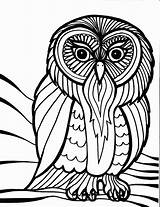 Owl Coloring Outline Pages Cool Adults Bird sketch template