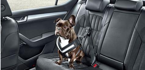 protection siege de voiture transporter chien en voiture les 8 accessoires