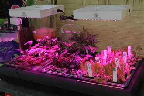 growing vegetables indoors with led lights growing vegetables indoors the gateway gardener