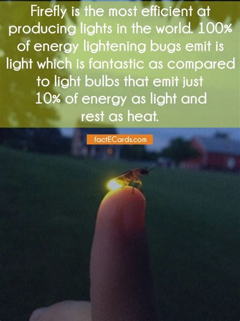 firefly is the most efficient at producing lights in the