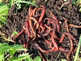 Vers De Terre Acheter : tout sur les jardins le ver de terre une solution id ale pour le jardin ~ Farleysfitness.com Idées de Décoration