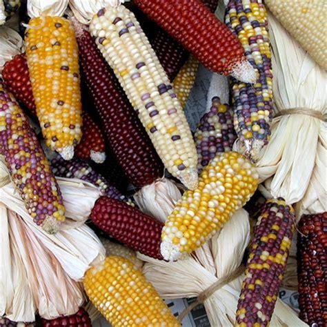 Alimenti Geneticamente Modificati Contro Ogm Politica E Nuovo Ordine Mondiale Come Creare