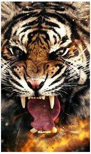 3D 4k Tiger Wallpaper | HD Wallpapers , HD Backgrounds ...