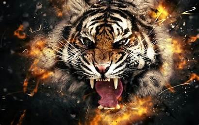 3d Tiger 4k Wallpapers Backgrounds Widescreen