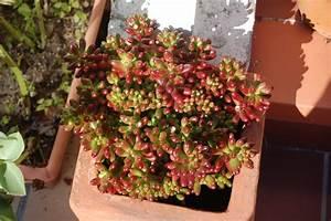 Comment Disposer Des Pots Sur Une Terrasse : comment planter une plante en pot marie claire ~ Melissatoandfro.com Idées de Décoration