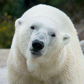Predators of Arctic Fox for Kids