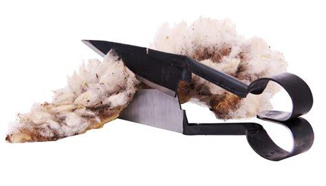 ciseau cuisine à tondre pour brebis tom press