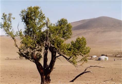 Die Fliegende Jurte by Die Mongolische Jurte Ger Zum Kaufen Jurten Jurt Yurt