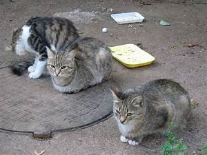 Homeless Cats — Russian Cats Pictures