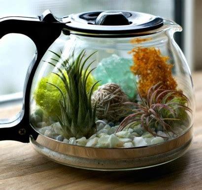 kaffeekanne terrarium mit herrlichen luftpflanzen selber