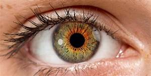How Your Eyes Work  An Interactive Tour Of The Human Eye