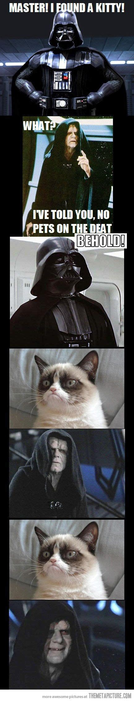 71 Best Images About Star Wars Cats On Pinterest Arnold
