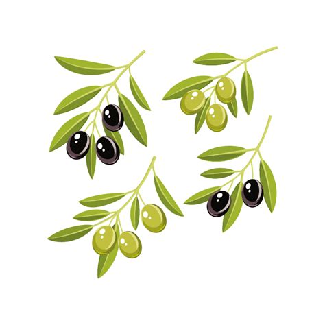 la cuisine d olivier kit 4 stickers branche d 39 olivier color stickers