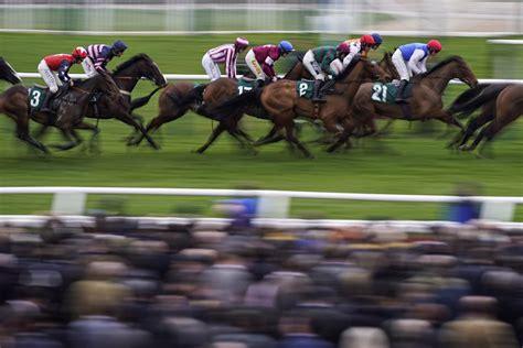 horse cheltenham racing festival results standard