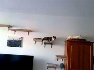 Arbre À Chat Mural : bandit et crevette sur leur arbre chat mural youtube ~ Melissatoandfro.com Idées de Décoration