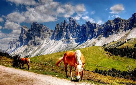 horses   dolomites mountains italy south tyrol