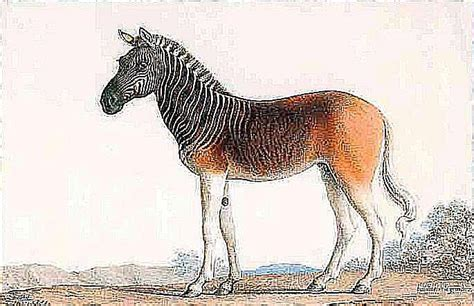 extinct horses horse breeds recently