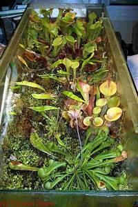 Büro Pflanzen Pflegeleicht : ber ideen zu b ropflanzen auf pinterest zimmerpflanzen b ros und schreibtisch pflanze ~ Michelbontemps.com Haus und Dekorationen
