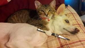 Funny Cat Pics - BDFjade