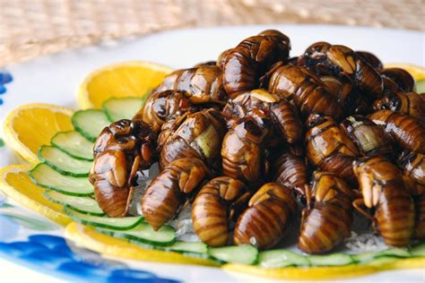 insecte cuisine are insects the future of food discovermagazine com
