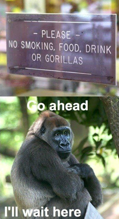 funny sign zoo gorilla food drink gorillas signs smoking animal please attack meme memes meal nonsense hilarious auto jokes animals