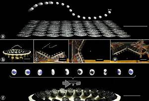 Levitation and Tractor Beams using Acoustic Holograms ...