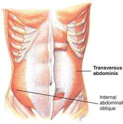 transversus abdominis location  function