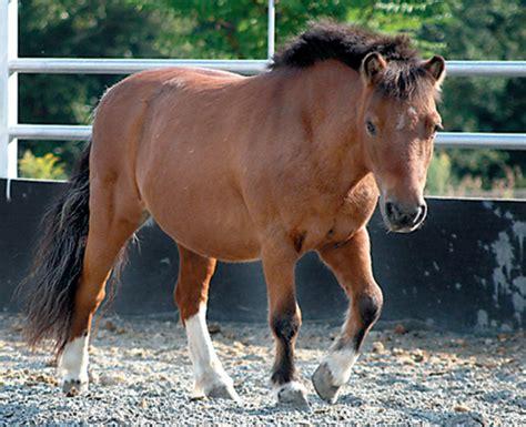miniature horses require full size care expert advice