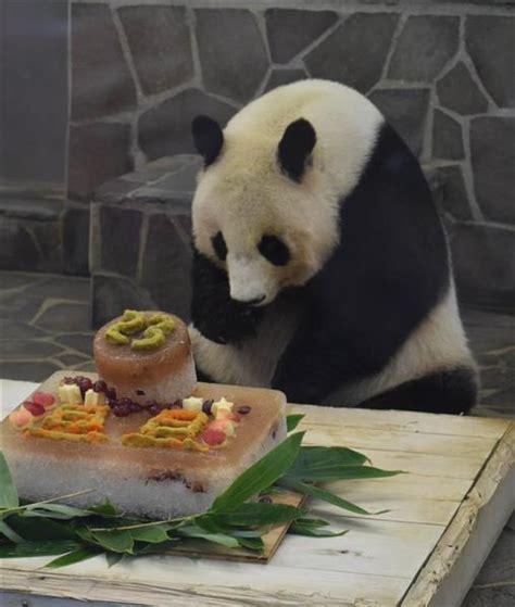 王子 動物園 パンダ
