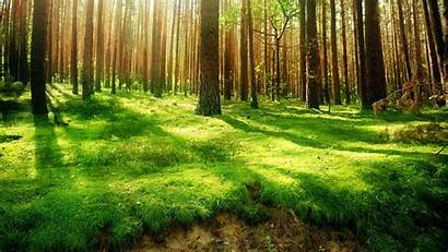 Forest Background Wallpapers Wall 1920