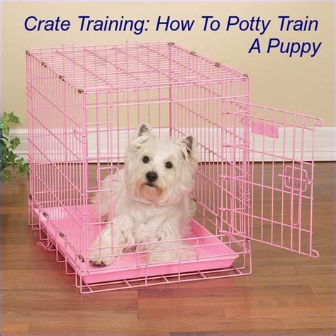 crate a puppy crate training how to potty train a puppy petslady com