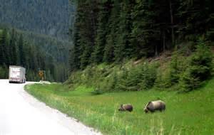 Kootenay National Park Canada Bears