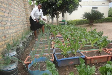 Farming In Your Backyard by Backyard Vegetable Farming Earns Income Everyday