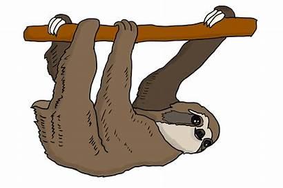 Sloth Transparent Deadly Faultier Sins Tree Paresse
