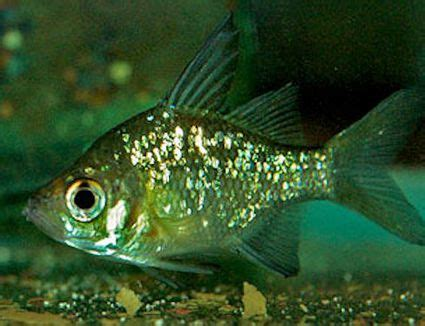 common fish names beginning