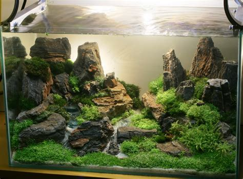 mountain aquascape aquascape design aquaticscapers contest winner