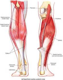 17  Images About Anatomy Information  U0026 Graphics On