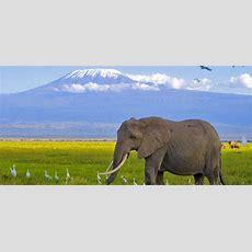 Tanzania Safari Parks  Tanzania Camping Safaris And Lodge
