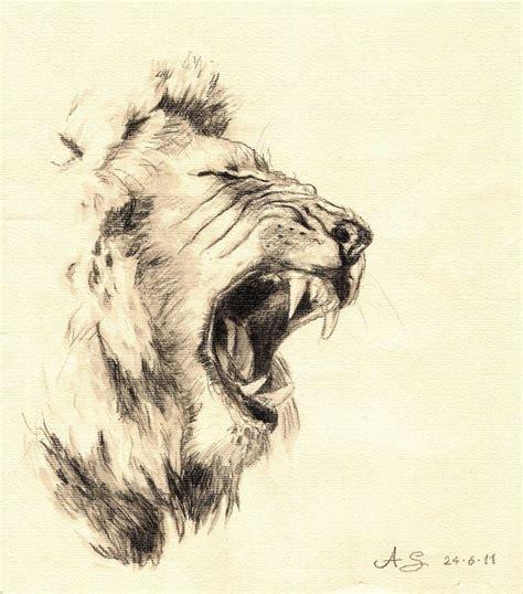 pencil drawn lion lion watersoluble pencil