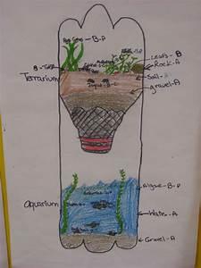 Mrs  Kooken U0026 39 S Blog  Studying Ecosystems