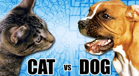 cats  dogs  part   dialog