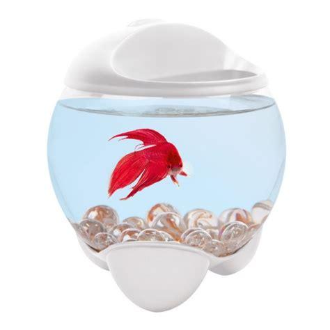 aquarium tetra betta blanc pour poisson combattant
