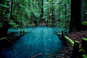 enchanted forest on Tumblr