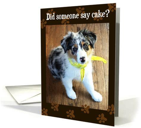 birthday    cake australian shepherd
