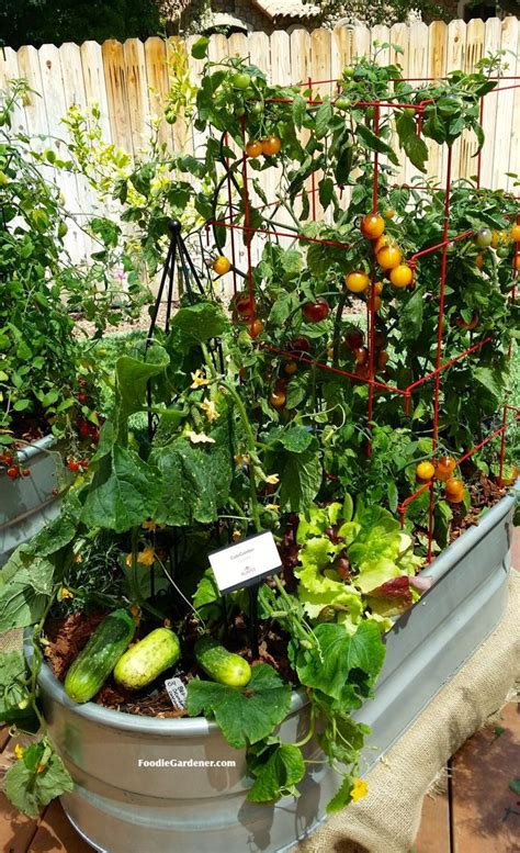 indoor vegetable garden raised beds a collection of ideas to try about other
