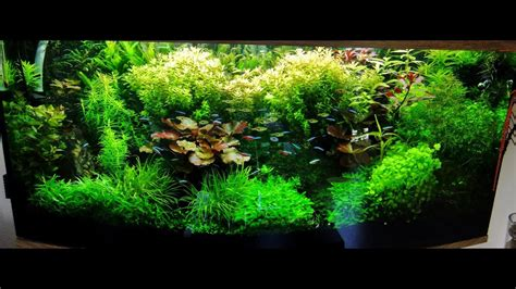 Aquascape Shrimp Tank by Planted Tank And Shrimp Aquascape Hd 720p