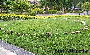 Pilze Im Rasen Was Kann Ich Dagegen Tun by Hexenringe Pilze Im Rasen Was Tun Tipps Zur Selbsthilfe