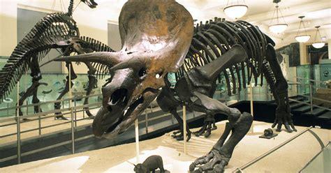 dinosaur fossils    museum amnh