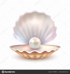 Clam Shell With Pearl Related Keywords - Clam Shell With ...
