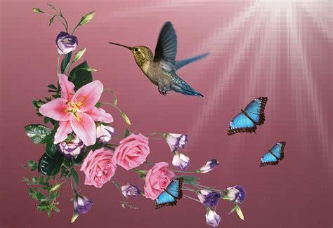 beija flor hummingbirds birds  image  pixabay